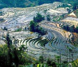 桂林旅游景点:龙脊梯田